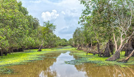 Tra Su cajeputskog i sommarafton fotografering för bildbyråer