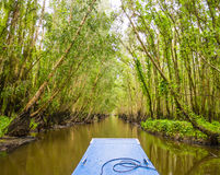 Tra Su mangrove forest, Mekong delta, Vietnam Stock Image