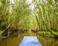 Tra Su mangroveskog, Mekong delta, Vietnam Fotografering för Bildbyråer