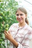 Trabajador agrícola de sexo femenino que comprueba las plantas de tomate en invernadero Foto de archivo