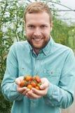 Trabajador agrícola de sexo masculino que comprueba las plantas de tomate en invernadero Fotos de archivo