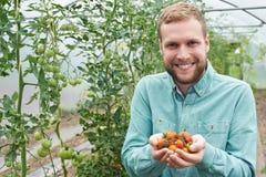 Trabajador agrícola de sexo masculino que comprueba las plantas de tomate en invernadero Fotos de archivo libres de regalías