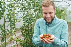 Trabajador agrícola de sexo masculino que comprueba las plantas de tomate en invernadero Imágenes de archivo libres de regalías