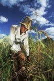 Trabajador agrícola, el Brasil Fotos de archivo libres de regalías