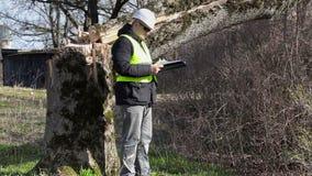 Trabajador con la comprobación del árbol cerca caido de la documentación almacen de metraje de vídeo