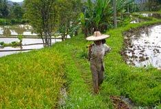 Trabajador de campo del arroz en Bukittinggi, Indonesia Foto de archivo libre de regalías