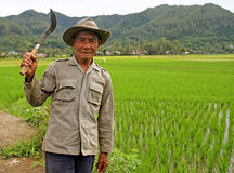 Trabajador de campo del arroz en el valle de Harau en Sumatra del oeste, Indonesia Fotografía de archivo libre de regalías