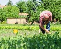 Trabajador de granja Foto de archivo libre de regalías