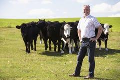 Trabajador de granja con la manada de vacas Fotos de archivo