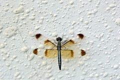Trabajador de la abeja Imagen de archivo libre de regalías