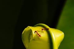 Trabajador de la hormiga Imagenes de archivo