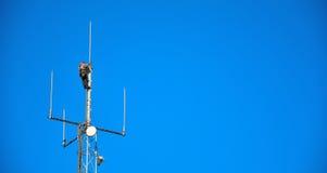 Trabajador de la mucha altitud que trabaja en un palo del teléfono móvil Foto de archivo libre de regalías