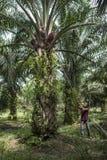 Trabajador de la plantación Imagen de archivo libre de regalías