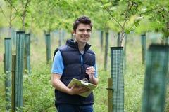 Trabajador de la silvicultura con el tablero que comprueba árboles jovenes Fotos de archivo