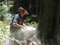 Trabajador de la silvicultura con una motosierra Fotografía de archivo libre de regalías