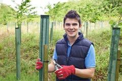 Trabajador de la silvicultura que cuida para los árboles jovenes Foto de archivo