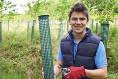 Trabajador de la silvicultura que cuida para los árboles jovenes Imagenes de archivo