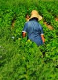 Trabajador de sexo femenino en granja Fotos de archivo