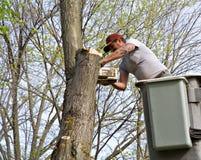 Trabajador del árbol fotografía de archivo