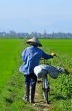 Trabajador del arroz de arroz Foto de archivo libre de regalías