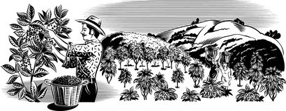 Trabajador del café en una plantación ilustración del vector