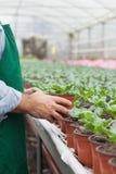 Trabajador del centro de jardinería que pone la planta en conserva abajo Foto de archivo libre de regalías