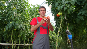 Trabajador del invernadero en el trabajo Foto de archivo