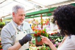 Trabajador del invernadero que da una planta a un cliente Imagen de archivo libre de regalías