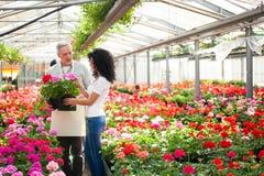 Trabajador del invernadero que da una planta a un cliente Fotos de archivo