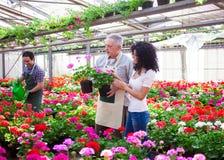 Trabajador del invernadero que da una planta a un cliente Foto de archivo libre de regalías