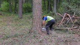 Trabajador del maderero del leñador en árbol protector de la madera de la leña del corte del engranaje en bosque con la motosierr metrajes