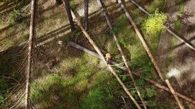Trabajador del maderero del leñador en árbol protector de la madera de la leña del corte del engranaje en bosque con la motosierr almacen de video