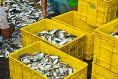 Trabajador del pescador Imagen de archivo