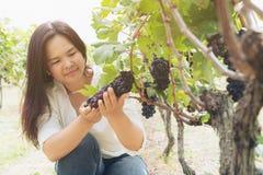 Trabajador del viñedo que comprueba las uvas de vino en viñedo imágenes de archivo libres de regalías