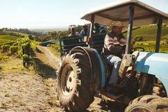 Trabajador del viñedo que transporta las uvas para wine fábrica Fotos de archivo