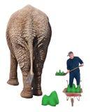 Trabajador divertido en el callejón sin salida Job Shovel Elephant Poop Foto de archivo libre de regalías