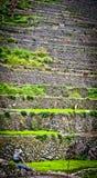 Trabajador en arroces de arroz en el ifugao, batad 2 Imagen de archivo libre de regalías