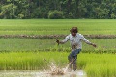 Trabajador en arroz de arroz Imagen de archivo libre de regalías
