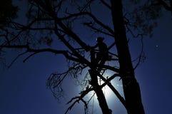 Trabajador en el árbol Imágenes de archivo libres de regalías