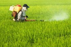 Trabajador en el campo del arroz Foto de archivo libre de regalías