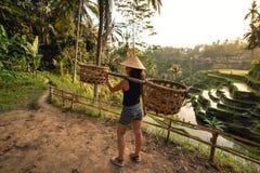 Trabajador en el campo del arroz que lleva alrededor Detalles agrícolas en terrazas del arroz Fotografía de archivo