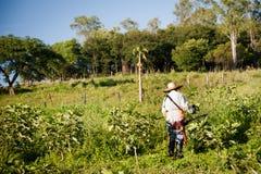 Trabajador en la plantación del higo Imagen de archivo libre de regalías