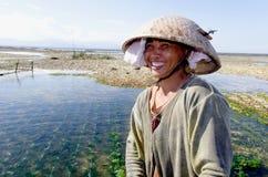 Trabajador indonesio de las algas marinas Fotografía de archivo
