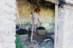 Trabajador indonesio de las algas marinas Imagen de archivo libre de regalías