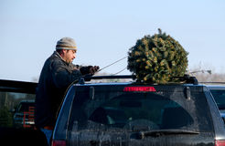 Trabajador que ata el árbol de navidad a un coche Imagen de archivo libre de regalías