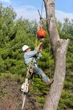 Trabajador que conecta un cable con el tronco de árbol Imagen de archivo libre de regalías