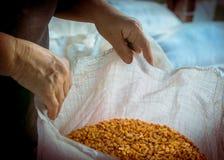 Trabajador y saco por completo de maíz imagen de archivo libre de regalías