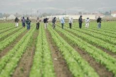 Trabajadores de granja en el trabajo Foto de archivo libre de regalías