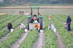 Trabajadores de granja sikh canadienses Imagenes de archivo