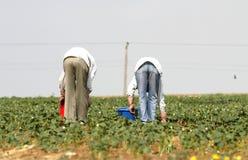Trabajadores de la pista Fotografía de archivo libre de regalías